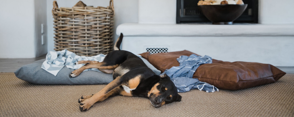 James Eco-Friendly Dog Beds
