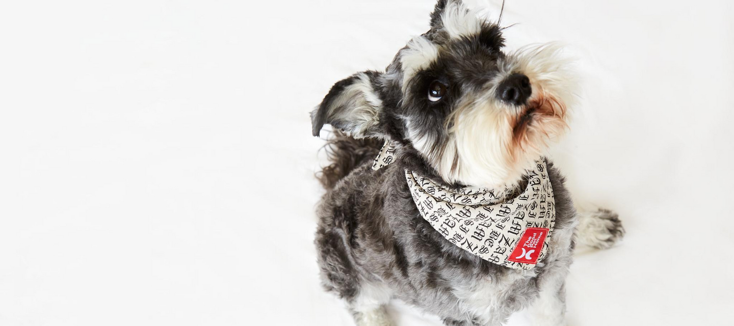 The Good Pet Home - Zambesi Dog Bandana