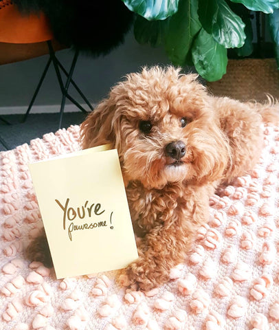 Pooch Design Greeting Cards