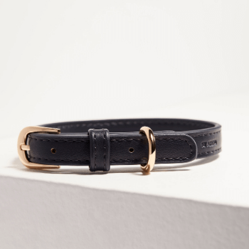 St Argo Navy Dog Collar