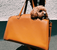 St Argo FRANK Vegan Leather Dog Carrier Bag in Caramel