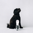 Thirsty Dog Drink Bottle White - The Good Pet Home