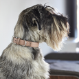 MiaCara Torino Leather Dog Collar