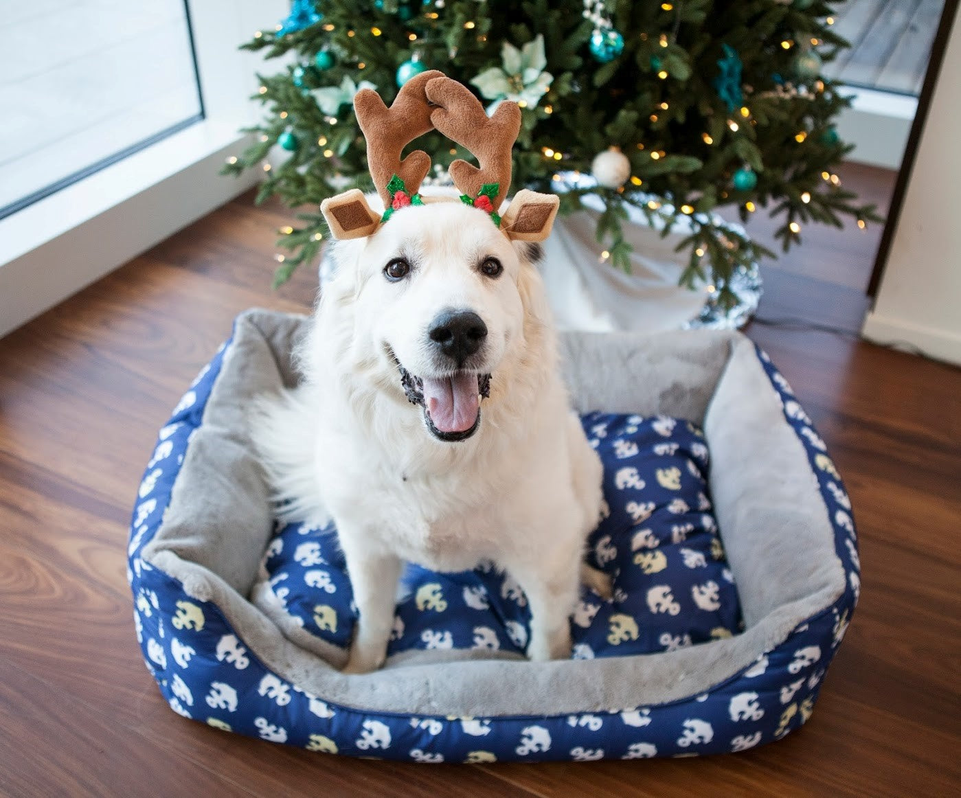 Holiday Pet Hazards: How to Keep Your Pet Safe