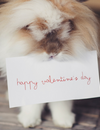 4 Ways to Spend Valentine's Day with Your Pets