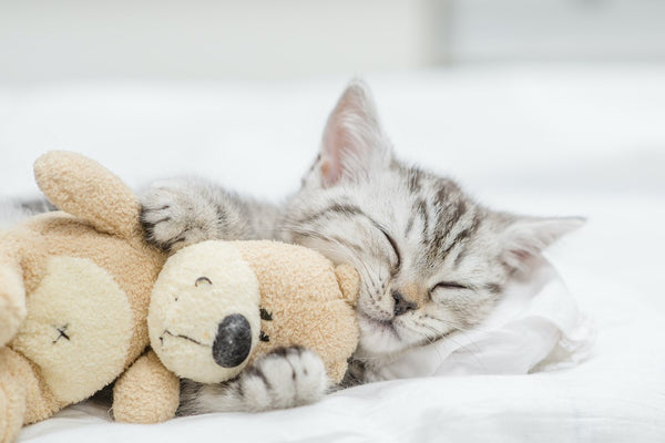 Why Choosing the Right Cat Bed is Important to Your Cat's Health
