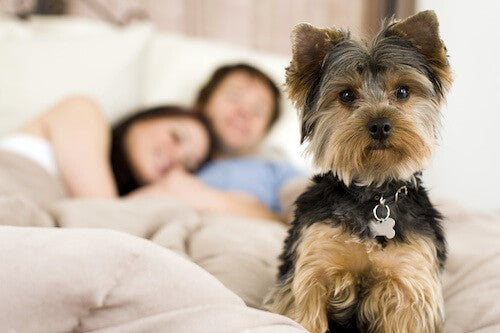 How to Cure Your Dog's Sleeping Problems