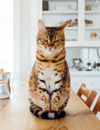 Biggest Stressor for Cats During Quarantine
