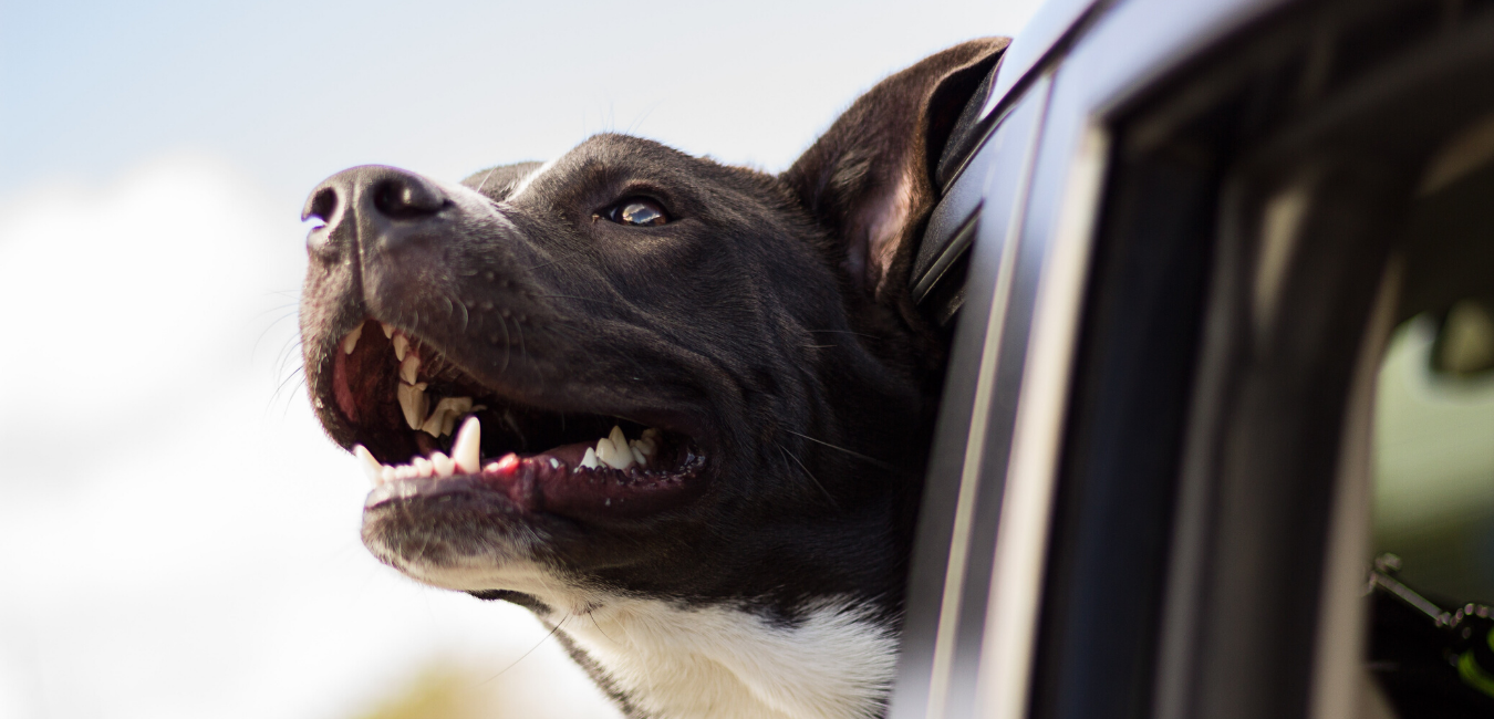 Your Ultimate Road Trip Guide for You and Your Dog