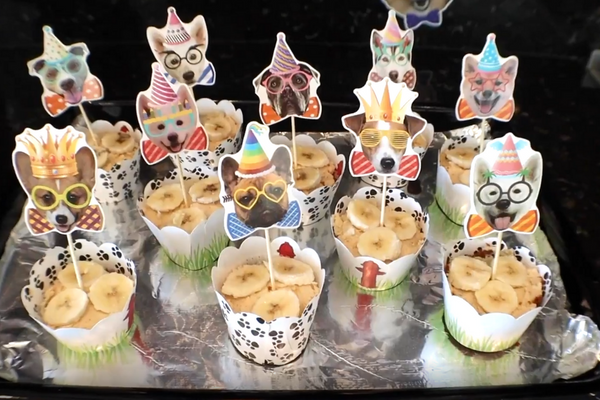 Easy and Dog-Friendly Peanut Butter & Banana Birthday Cupcake Dog Treat Recipe