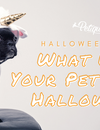 What Will Your Pet Be for Halloween?
