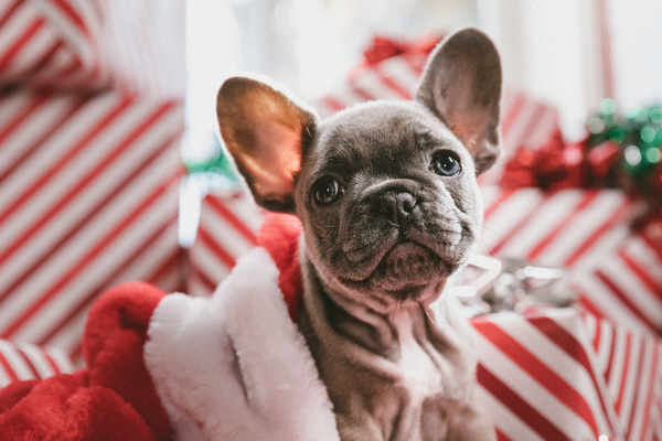Top 6 Most Wanted Holiday Gifts for Dog Lovers