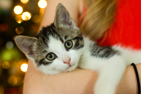 Top 5 Unique Holiday Gift Ideas for Cat Lovers