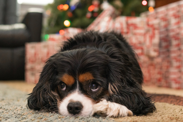 Emergency Free Holiday Pet Safety Tips