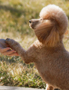 Top 5 Basic Commands You Can Teach Any Dog