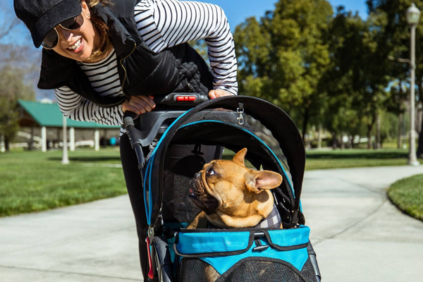 5 Reasons Why Pets Need Pet Strollers