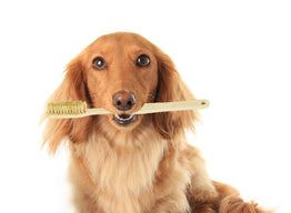 5 Hacks to Use Petique's Eco-Friendly Bamboo Pet Toothbrush