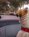 How to Avoid Car Accidents Caused by Unrestrained Pets