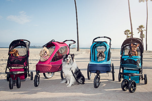 Petique's Travel System For Your Pets - What Are The Benefits