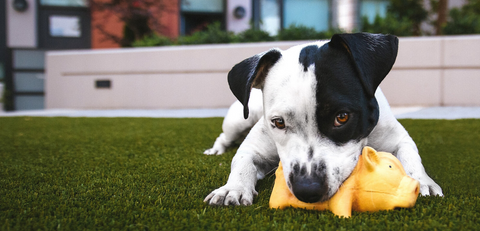 puppy chewing on pet toy on grass