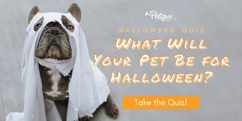 Petique's What Will Your Pet Be For Halloween? Halloween Quiz