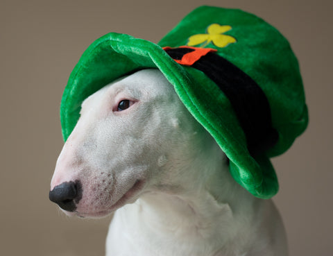 dog with st patricks day hat