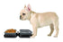 products/petique-water-food-portabowl-bowl-dog-travel-gray-portable-frenchie.jpg