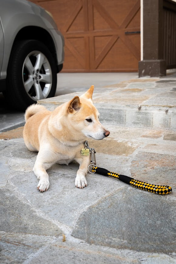 Reflective Leashes with Shock Absorber