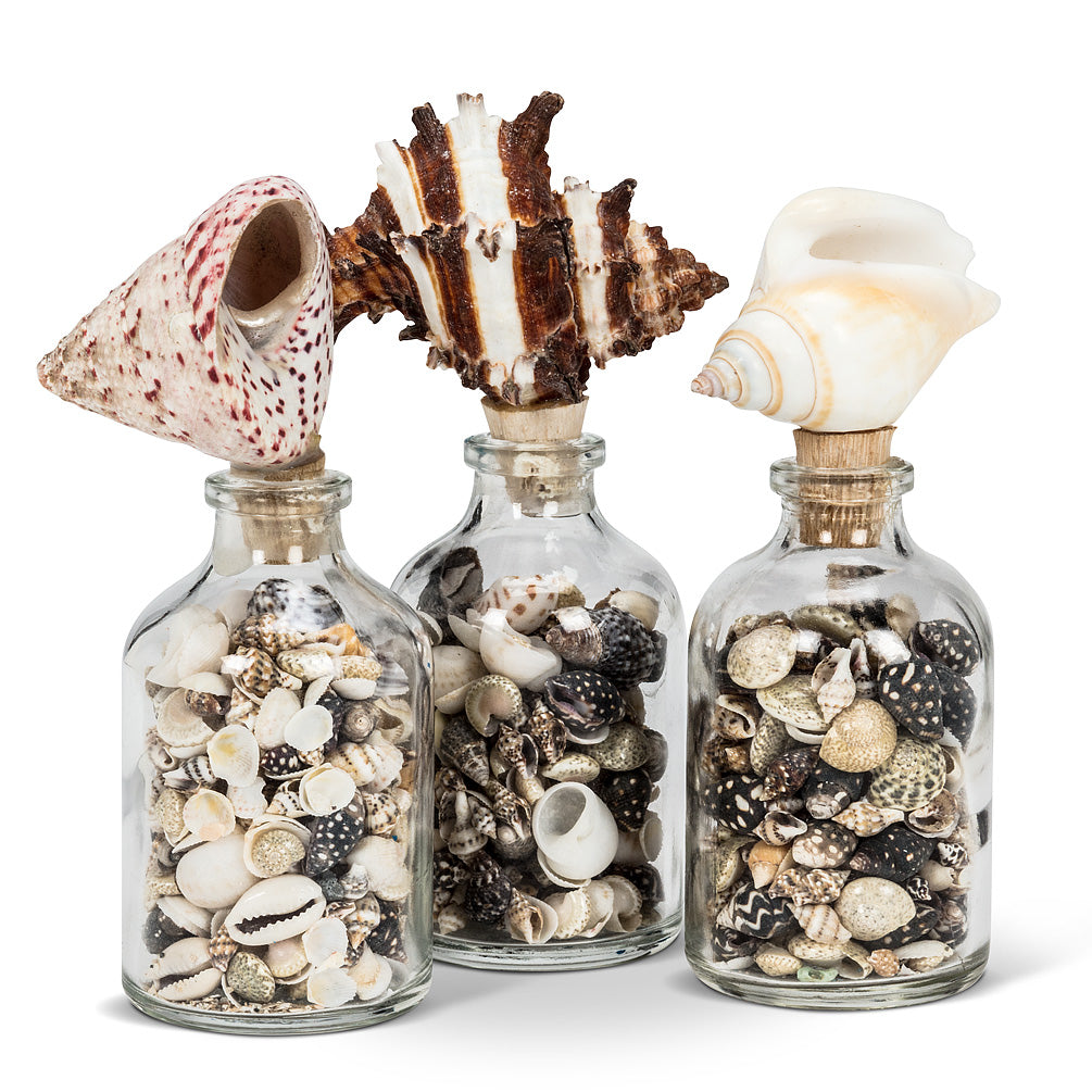 Seashells & Curiosities