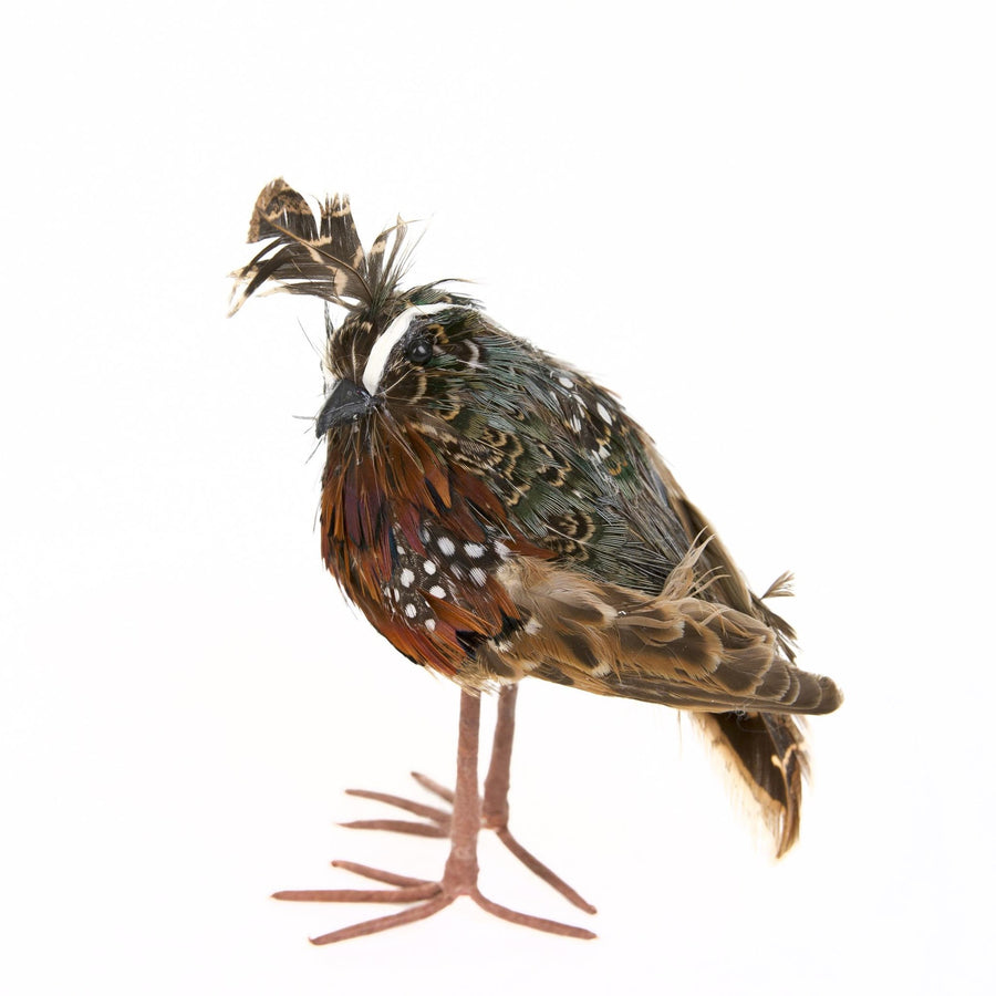 Standing Feathered Quail