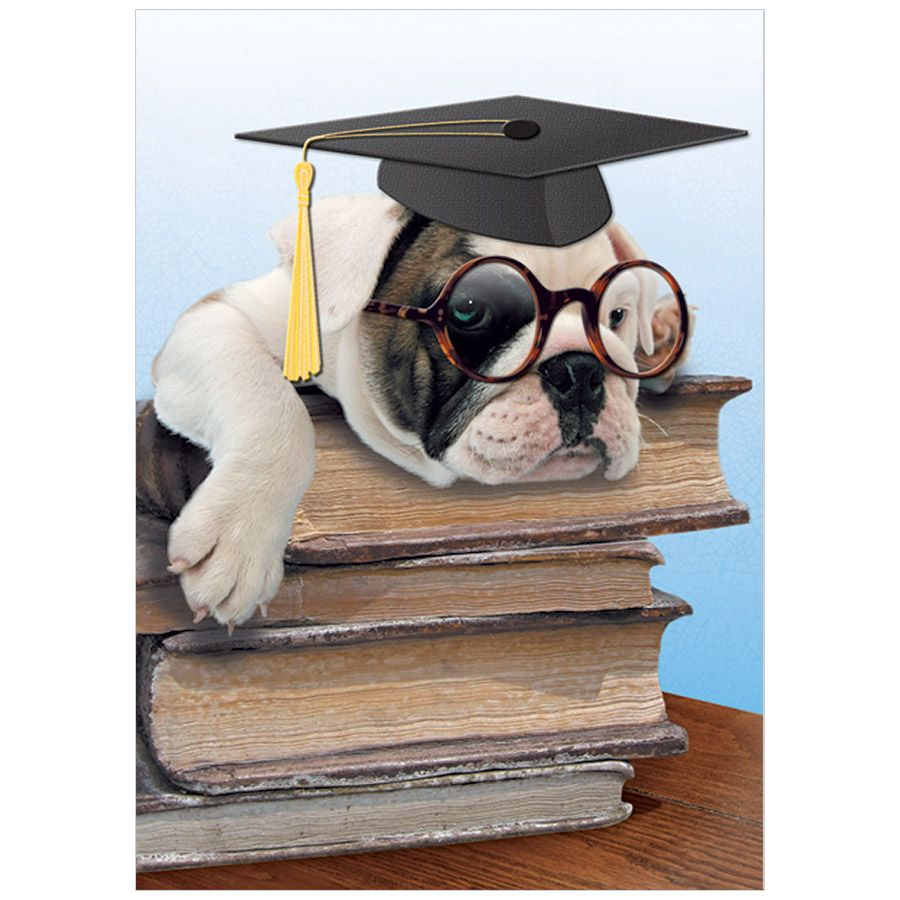Dog On Books Graduation Card, Bella Flor, Putti Fine Furnishings