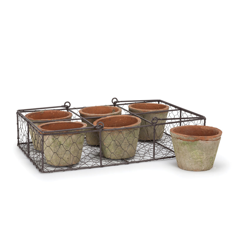 Six Moss Pot in Basket, AC-Abbott Collection, Putti Fine Furnishings