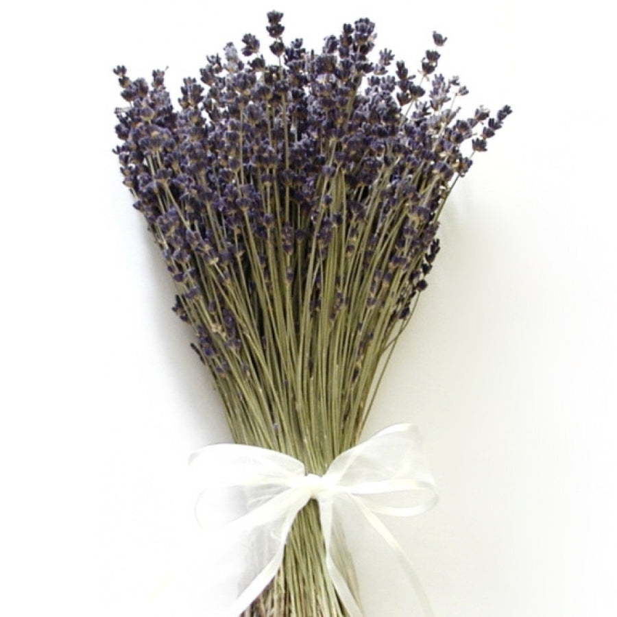 Lavender Bunch-Home Fragrance-HDF-Holland Dried Flowers-Putti Fine Furnishings