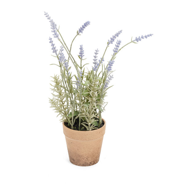 Lavender in Terra Cotta Pot | Putti Fine Furnishings