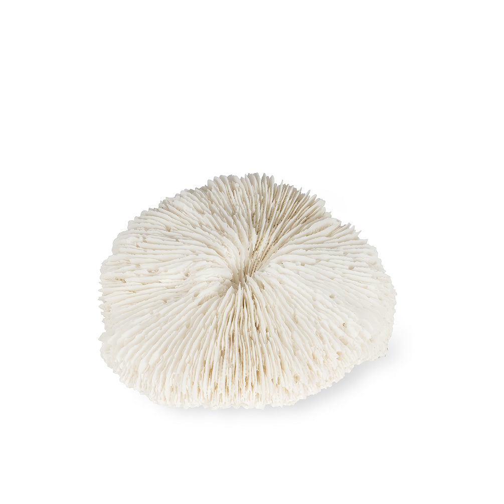 Small White Disc Coral | Putti Fine Furnishings Canada
