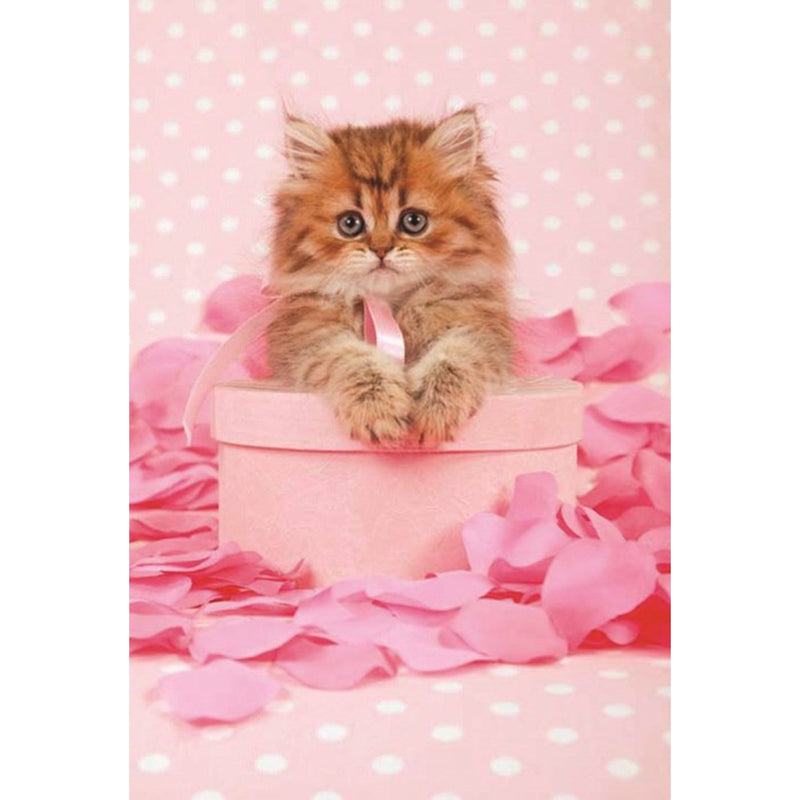 Cat on Pink Box Greeting Card, Bella Flor, Putti Fine Furnishings