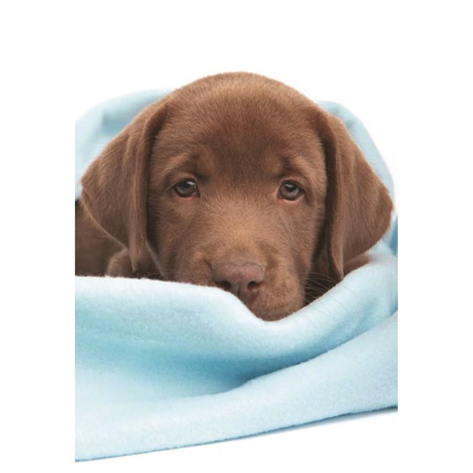 Chocolate Lab Greeting Card, Bella Flor, Putti Fine Furnishings