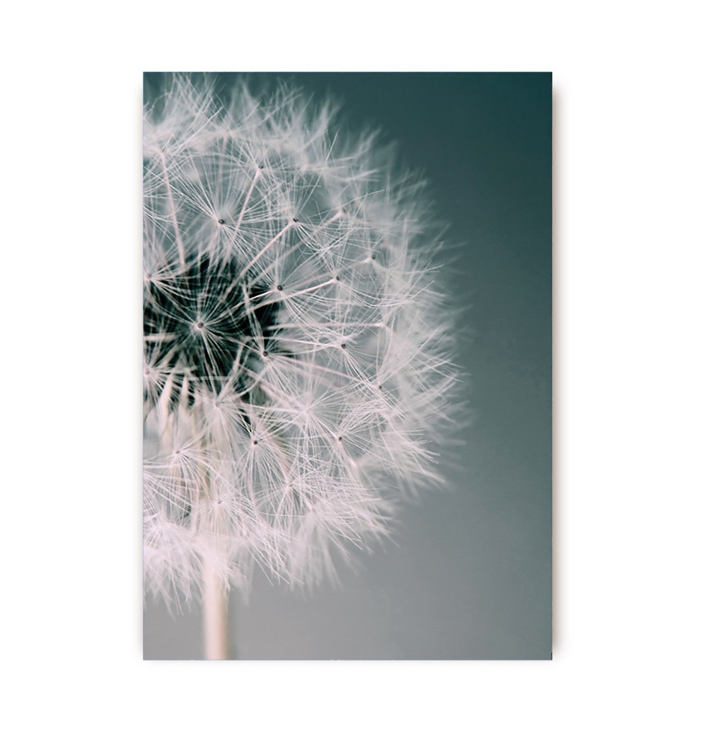 Dandilion Dreams Greeting Card, Paper E Clips, Putti Fine Furnishings