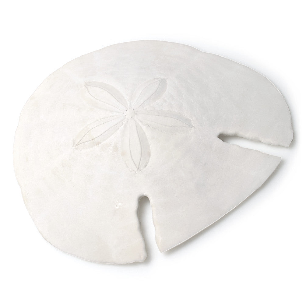 Sand Dollar, AC-Abbott Collection, Putti Fine Furnishings