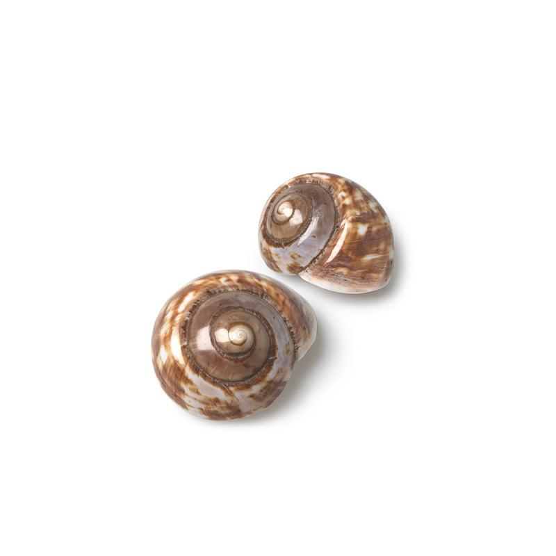 Landsnail Shell-Decorative Accessories-AC-Abbott Collection-Putti Fine Furnishings