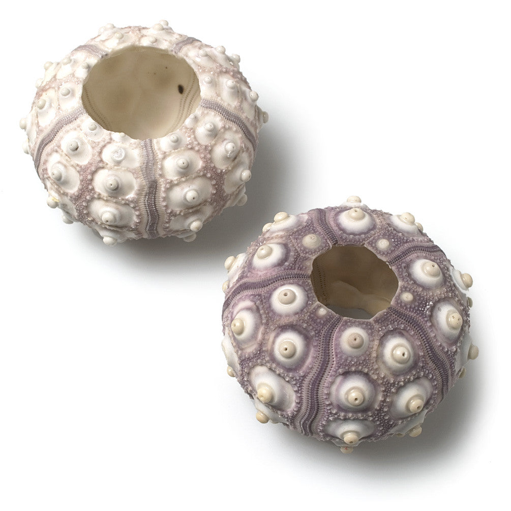 Sputnik Sea Urchin, AC-Abbott Collection, Putti Fine Furnishings