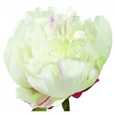 Peony Closed Short Stem - Cream, WC-Windward Canada, Putti Fine Furnishings