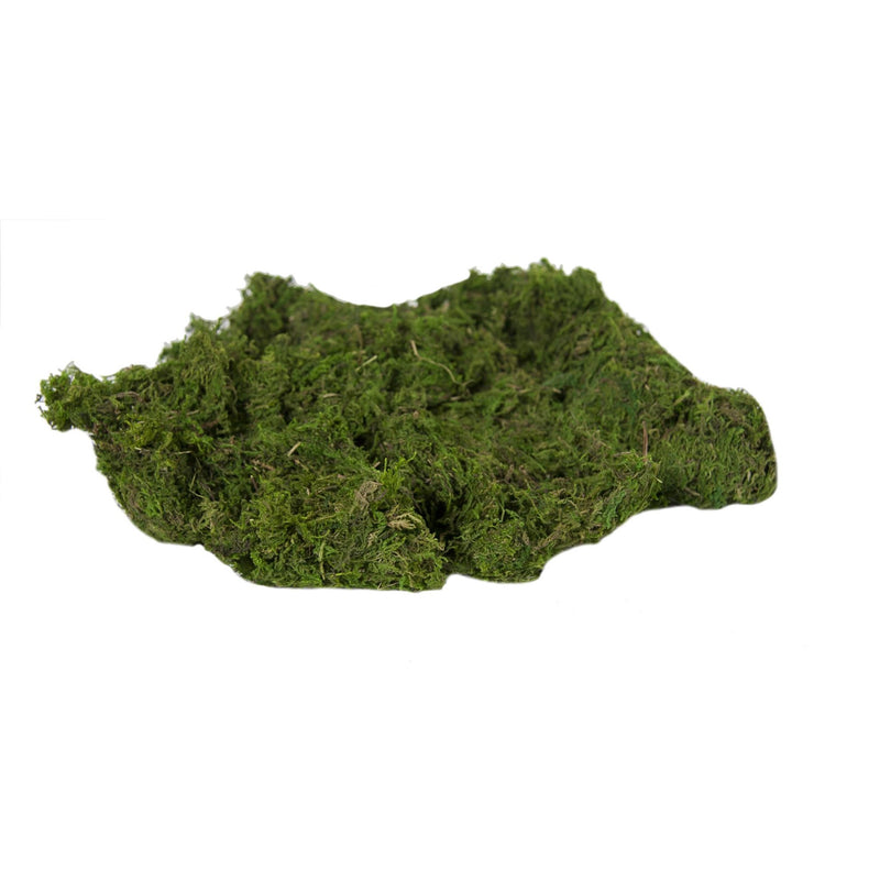 Bag of Decorative Green Preserved Moss