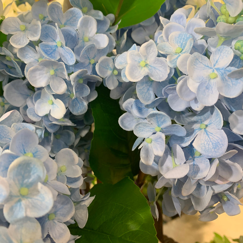 Blue Fresh Touch Hydrangea Stem