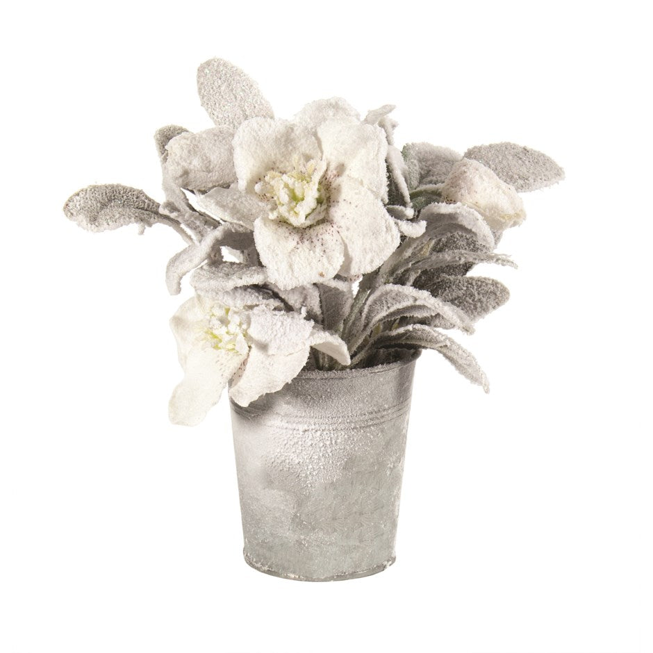 Snowy Flowers in Tin Pot | Putti Christmas Decorations