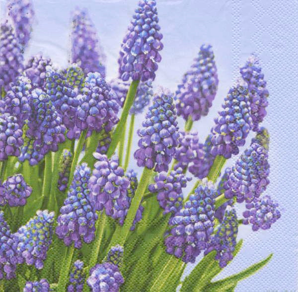 Purple Muscari Paper Napkins - Lunch | Putti Easter Spring