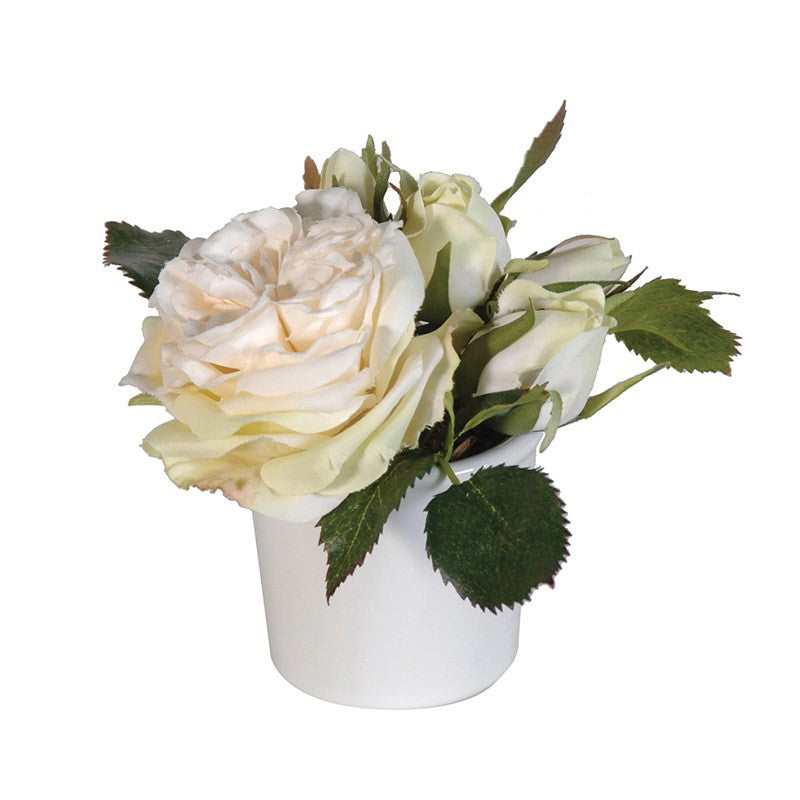 Cream Ashworth Roses in Pot-Accessories-Coach House-Putti Fine Furnishings