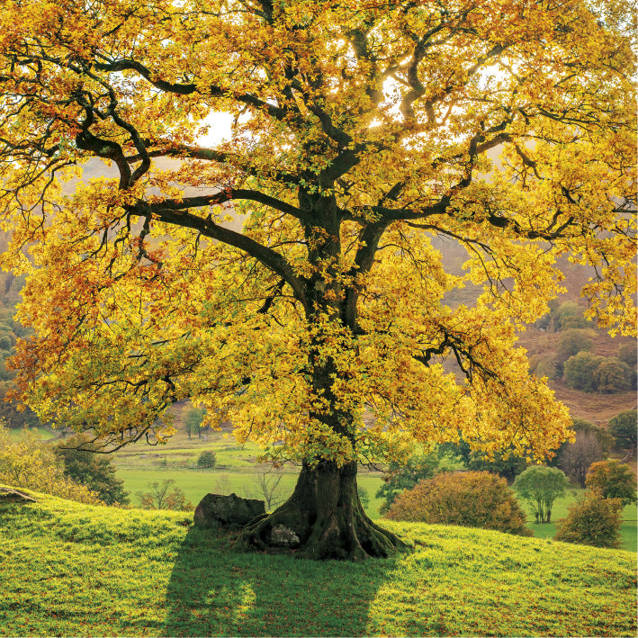 Autumn Tree Greeting Card | Putti Fine Furnishings