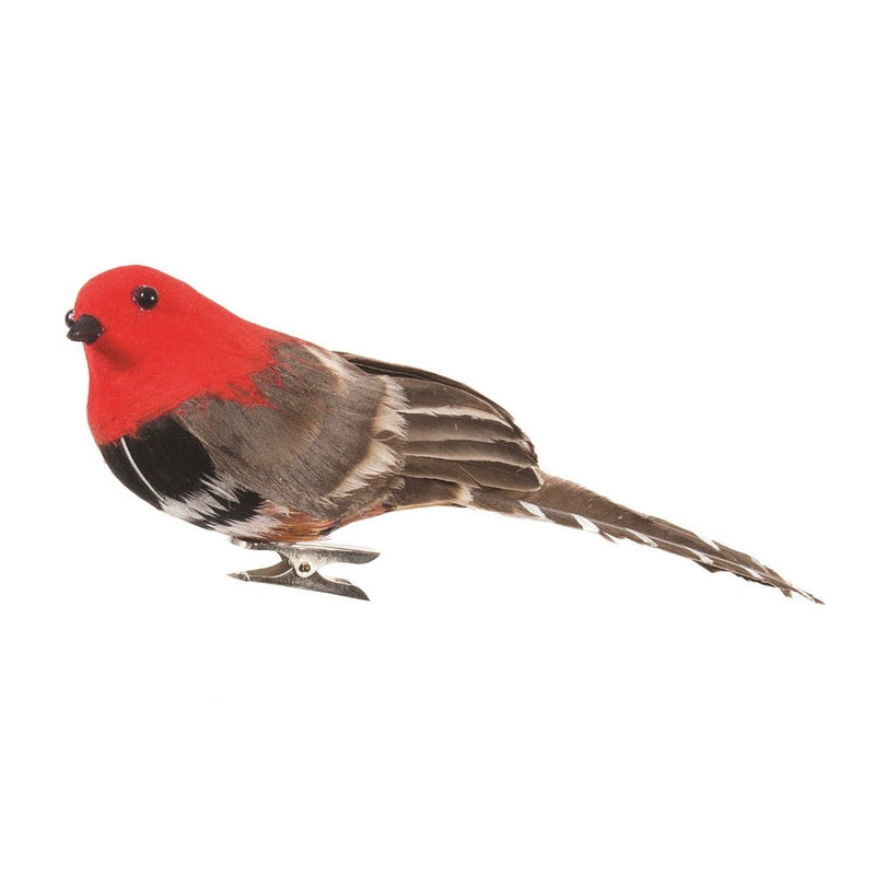 Red and Natural Feather Bird