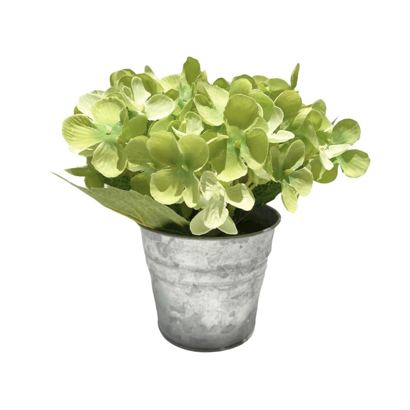 Green Hydrangea in Tin Pot